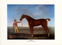 Race horse print of Diomed. Painted by J. Nost Sartorius