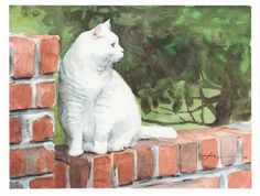 white cat on a brick