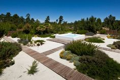 Garden In Comporta - Picture gallery