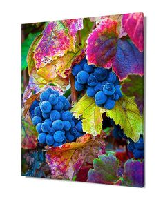 This fine art photograph of colorful grapes and autumn leaves was captured in a Napa Valley vineyard during harvest season in California. Now you can enjoy the beauty of harvest time with its vibrant colors with a Napa Valley print.  Title: Napa Valley Harvest  We offer museum grade limited edition prints and canvas gallery wraps photographed by Susan Taylor made to order printed on very high quality canvas and professional photo paper using archival pigmented inks. Please choose your size…