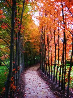 Beautiful fall weather!... I want to be there right now!!!