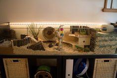 https://flic.kr/p/nD78Lj   Ikea hack Detlof hamster cage   Ikea Hack Detolf cage setup