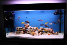 How to Make Fish Aquarium Decor