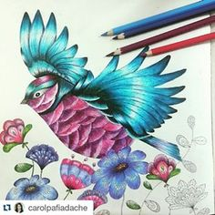 Reino animal #jardimsecreto Instagram tagged photos - Enjoygram