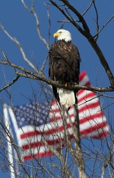 Old Glory & The American Eagle