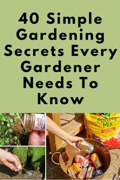 40 Simple Gardening Secrets Every Gardener Needs To Know #Simple #Gardening #Secrets #Every #Gardener #Needs #Know Gardening Hacks, Organic Gardening Tips, Gardening For Beginners, Landscaping Plants, Outdoor Landscaping, Garden Plants, Growing Microgreens, Growing Herbs, Container Gardening Vegetables
