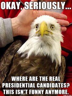 Concerned Eagle
