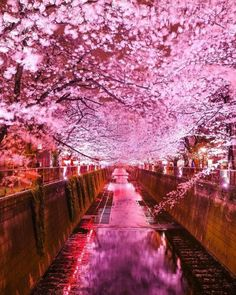 "banshy: ""The Nakameguro Cherry Blossom Festival by Kamakura Cafe "" Japan Cherry Blossom Wallpaper, Sakura Cherry Blossom, Cherry Blossoms, Beautiful World, Beautiful Places, Beautiful Pictures, Beautiful Nature Wallpaper, Beautiful Landscapes, Pink Photography"