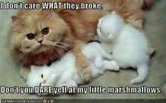 Mama cat!!