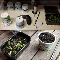 Følger du meg påFacebookogInstagram? :) Jeg har dessverre ikke grønne fingre, men håper likevel hvert år at jeg får til kunststykket å dyrke frem en spiselig plante eller vekst he…