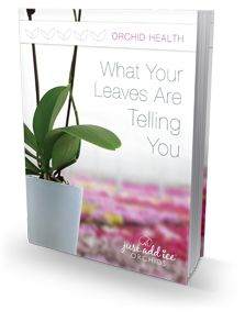 How do you care for Phalaenopsis orchids with yellowing leaves?