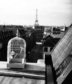 1931...........RUE DE VAUGIRARD................PARIS..........PHOTO DE ANDRÉ KERTESZ..........SOURCE MIMBEAU.TUMBLR.COM..........