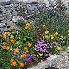 edible border - great website for edible landscaping designs