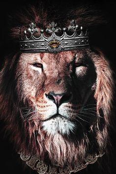 48216291 wild lion with flowers Animals Poster Print Lion King Art, Lion Of Judah, Lion Art, All Animals Photos, Lions Photos, Lion Images, Lion Pictures, Wild Animal Wallpaper, Lion Wallpaper Iphone