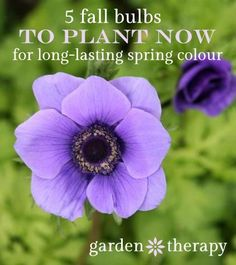 Five Fall Bulbs to Plant For Long Lasting Spring Colour