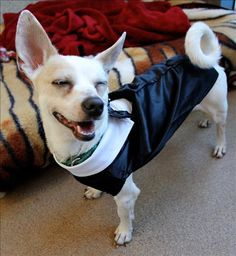 WINK!  DJ is James Bond for Halloween, what's your pet's costume this year?