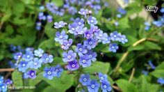 Little flowers standing under the sun on a beautiful #spring day. http://buff.ly/1OGuGgh?utm_content=buffer5345a&utm_medium=social&utm_source=pinterest.com&utm_campaign=buffer Can someone tell me how this #flower is called?
