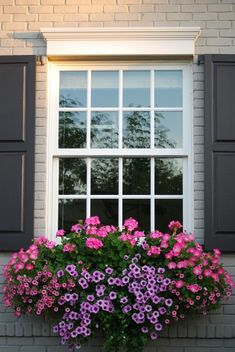 30 Best Flowers Plant for Window Boxes 2019 - Craft Home Ideas 42 Best Flowers for Window Boxes 93 the Best Plants for Wonderful Spring Window Boxes 3 Window Box Plants, Window Box Flowers, Window Planter Boxes, Planter Ideas, Container Flowers, Container Plants, Container Gardening, Succulent Containers, Garden Windows