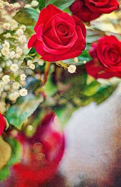 Indigo Crossing Red Draw, Colors Of Fire, Every Rose, Coming Up Roses, Good Morning Gif, Rose Bush, Love Rose, Bottle Vase, Beautiful Roses