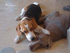 National Pet Memorial Day ~ Carlotta Model