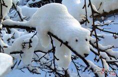 Snow Art Cute Picture