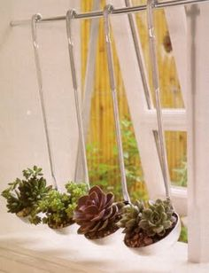 Attach a rack with soup ladles to the wall to create a mini succulent garden anywhere!