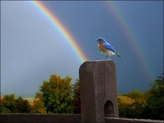 """Somewhere over the rainbow."""