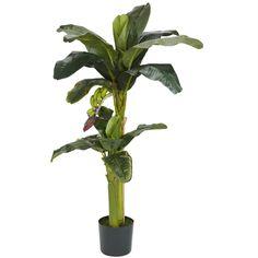 5ft+3ft Banana Silk Tree w-Bananas
