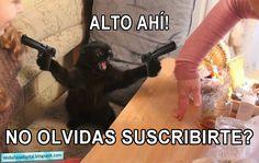 Plaza Digital: Memes del Día