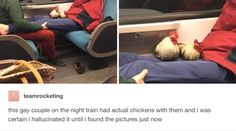 This potential hallucination: | Literally Just 18 Really Cute And Wholesome Tumblr Posts