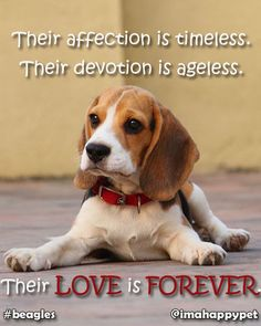 Dog's LOVE is FOREVER! #LOVE #FOREVER