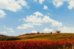"From Contest ""I colori dell'autunno"" http://adoroletuefoto.it"