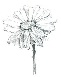 Google Image Result for http://static5.depositphotos.com/1041273/537/i/450/dep_5376773-Daisy-draw.jpg