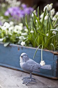 quenalbertini: Spring time with a decorative bird figurine and flowers in a blue wooden crate My Secret Garden, Gras, Spring Garden, Blue Bird, Garden Inspiration, The Great Outdoors, Garden Art, Spring Time, Container Gardening