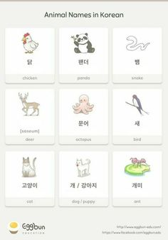 Names in Korean Chat to Learn Korean with Eggbun!Animal Names in Korean Chat to Learn Korean with Eggbun! Korean Words Learning, Korean Language Learning, Chinese Language, Japanese Language, South Korean Language, Italian Language, Spanish Language, French Language, Learning Spanish