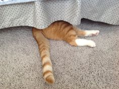 Safari only thinks he is hiding !