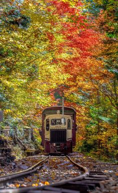"samwanda: ""blissedasanewt: "" Akazawa forest railway, Nagano, Japan (Kenichi Ito via TOKYOCAMERACLUB: / lifeisverybeautiful:) "" "" Beautiful World, Beautiful Places, Trains, Nagano Japan, Autumn Scenes, Fall Pictures, Train Tracks, Japan Travel, Travel Inspiration"