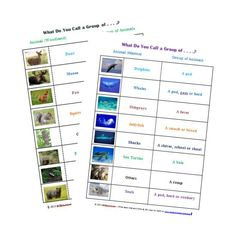 Groups of Animals worksheet -- What do you call a group of ...?  Fun activity for kids!