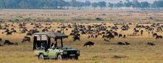 safari | croppedimage1280500-wildebeest-migration-luxury-safari