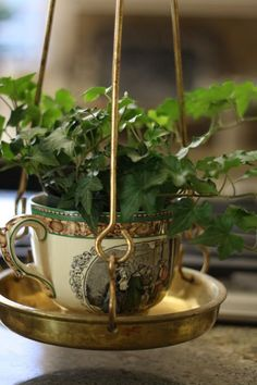 ivy, vintage cup, brass scale - charming!
