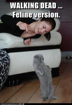 Zombie Kitteh wants tuna brains...