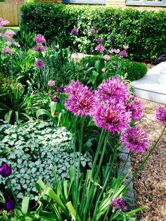 Alliums and Lamium
