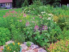 Bee balm on pond bank  Farm Made into a Garden for Wildlife
