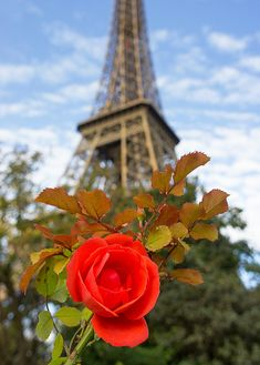Eiffel Rose Paris Eiffel Tower Red Rose Red by TheWorldExplored