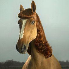 horsehair  by Julian Wolkenstein.