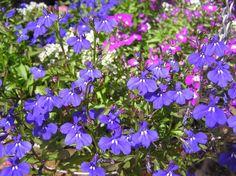 רוח סתיו: מכינים את הגינה לעונת המעבר | בניין ודיור