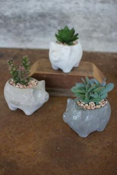 ARTIFICIAL SUCCULENTS IN CEMENT PIG PLANTERS