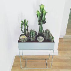 Via Emma B   Natuurlijk Rosalie   Ferm Living Plant Box   Cactus