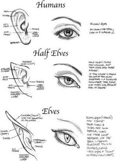Eye and ear drawing styles by Williams1967