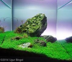 2014 AGA Aquascaping Contest - Entry #243